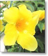 Yellow Hibiscus St Kitts Metal Print