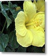 Yellow Hibiscus Watercolor Metal Print
