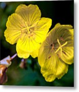 Yellow Is Gold Among The Flowers Metal Print