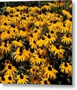 Yellow Is The Color Of ..... Metal Print