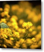 Yellow Island Metal Print
