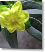 Yellow Jasmine Metal Print