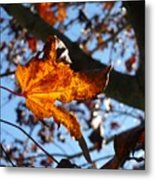 Yellow Leaf 1 Metal Print