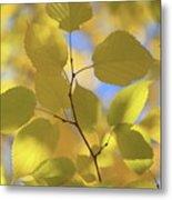 Yellow Leaves. Metal Print