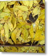 Yellow Leaves On The Ground  Metal Print