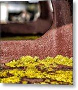 Yellow Lichen Metal Print