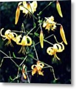 Yellow Lilies In Fort Tryon Park Metal Print