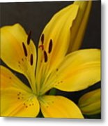 Yellow Lily 1 Metal Print