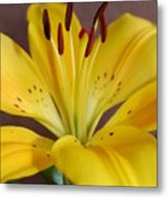 Yellow Lily 2 Metal Print