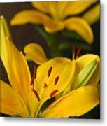 Yellow Lily Mirror Metal Print