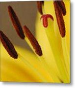 Yellow Lily Reach 2 Metal Print