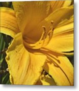 Yellow Lily Shines Brightly  Metal Print