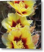 Yellow Long- Spined Prickly Pear Cactus  Metal Print