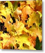 Yellow Maple Leaves Metal Print