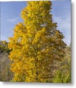 Yellow Maple Tree 1 Metal Print