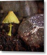Yellow Mushroom Metal Print
