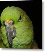 Yellow-naped Amazon Parrot Metal Print