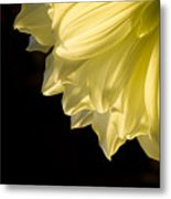 Yellow On Black Metal Print by Ron Hoggard