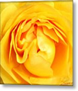 Yellow Petals Metal Print by Cathie Tyler