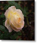Yellow/pink Rose Metal Print