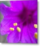 Yellow Pistil Metal Print