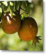 yellow Pomegranate Metal Print by Atul Daimari