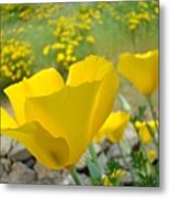Yellow Poppy Flower Meadow Landscape Art Prints Baslee Troutman Metal Print