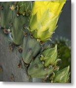 Yellow Prickly Pear Cactus Bloom Metal Print