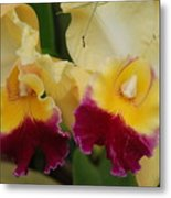 Yellow Purple Orchids Metal Print