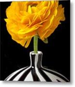 Yellow Ranunculus In Striped Vase Metal Print