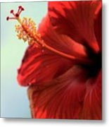 Yellow Red And Coral Hibiscus Profile Metal Print