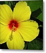 Yellow Red Hibiscus Metal Print
