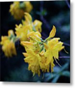 Yellow Rhododendron Flower Metal Print