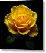 Yellow Rose 4 Metal Print