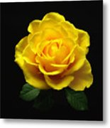 Yellow Rose 6 Metal Print