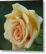 Yellow Rose And Frog Metal Print