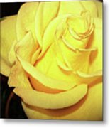 Yellow Rose For Friendship Metal Print