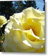 Yellow Rose Garden Landscape 3 Roses Art Prints Baslee Troutman Metal Print