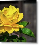 Yellow Rose Of Los Gatos Metal Print