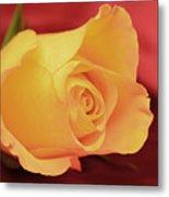 Yellow Rose On Red Metal Print