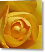 Yellow Rose Art Metal Print