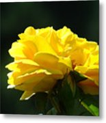 Yellow Rose Sunlit Rose Garden Landscape Art Baslee Troutman  Metal Print