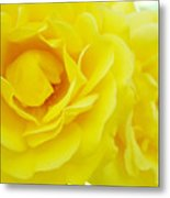 Yellow Roses Art Prints Botanical Giclee Prints Baslee Troutman Metal Print