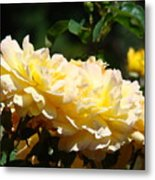 Yellow Roses Sunlit Rose Flowers 1 Rose Garden Giclee Artwork Baslee Troutman Metal Print