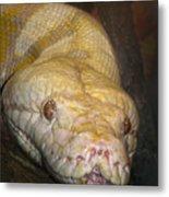 Yellow Snake Metal Print