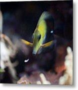 Yellow Spotted Aquarium Fish Metal Print