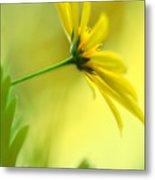 Yellow Spring Daisy Abstract By Kaye Menner Metal Print