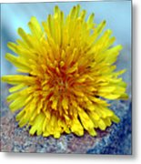 Yellow Spring Metal Print