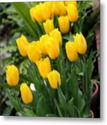 Yellow Spring Tulips Metal Print