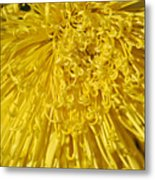Yellow Strings Metal Print
